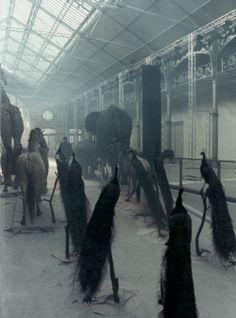 Alexander McQueen S/S 2009 catwalk, photographed by Anne Deniau