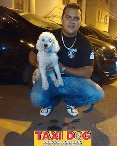 TAXI DOG MONTANHA TRANSPORTE DE ANIMAIS NO RIO DE JANEIRO: Duque10/12/2015 -- Partiu!!! Rio de Janeiro/RJ par...