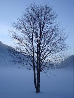 tim0569: Winter Wonderland