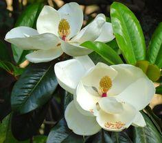 """""""Como flores hermosas, con color, pero sin aroma, son las dulces palabras para el que no obra de acuerdo con ellas.""""  Buda"""