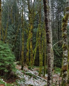 Mossy snowy foresty goodness! by livinglifeunscripted
