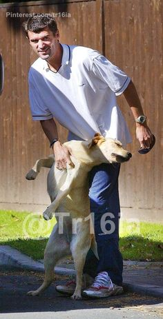 Manchester United captain Roy Keane walking his Labrador retriever Triggs.