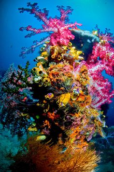 Colorful coral reefs off the coast of Raja Ampat via scottygraham.blogspot.ca