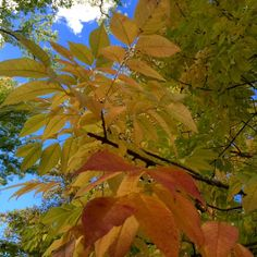 Fall color and bright blue sky.