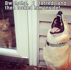 lol..funny animals