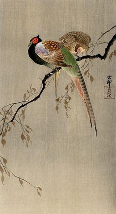 Tumblr Ohara Koson, Chinese Painting, Chinese Art, Japan Painting, Art Asiatique, Illustration Art, Illustrations, Botanical Illustration, Art Japonais