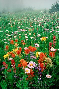 Wildflowers Paradise Valley - Mr Rainier, Washington - by Art Wolfe All Nature, Amazing Nature, Art Wolfe, Beautiful World, Beautiful Places, Paradise Valley, Mount Rainier National Park, Belle Photo, Beautiful Landscapes