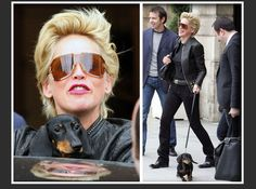 Sharon Stone has a beautiful doxie (like Frankie)--with a mind of his own!