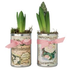 hyacinths in vintage-style tins- tin cans + vintage labels = sweet gift