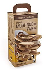 Shop for Mushroom Kit by Back to the Roots | Free Shipping