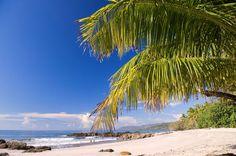 Costa Rica, Puntarenas, Mal Pais, palm trees along beach