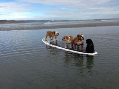 Which one of u boof heads forgot the paddle ??