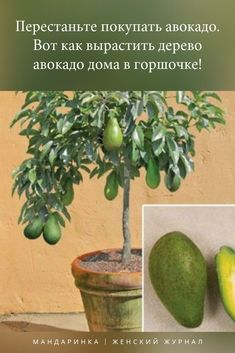 Bonsai Art, Small Farm, Garden Pool, Flower Beds, Good Advice, Potted Plants, Agriculture, House Plants, Orchids