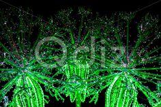 Qdiz Stock Photos Construction of Flowers Illuminated by Colorful Lamps,  #art #backdrop #background #bright #bulb #Christmas #dandelion #decor #decoration #design #element #eve #flower #garland #glow #glowing #holiday #illuminated #illustration #image #lamp #led #light #modern #night #sculpture #shiny #string #xmas