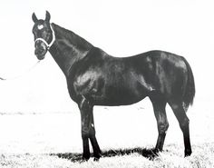 Moon Deck's family is one of the fastest families of Quarter Horses to breeze into the record books. Moon Deck was inducted into the Hall of Fame in 1996. Learn more about the AQHA Hall of Fame inductees at http://aqha.com/Foundation/Museum/Hall-of-Fame/Hall-of-Fame-Inductees.aspx .