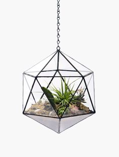 Home Decor - Suspended Tetra Hanging Terrarium and Glass Crafts for  Office/Garden/Home Decoration Glass Planters for  Succulent/Plants/Flowers-in Glass ...