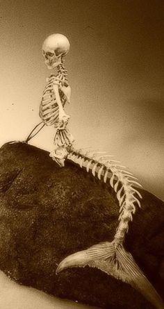 mermaid skeleton -- creepy, yet with a haunting beauty. Mermaid Skeleton, Skeleton Art, Mermaids And Mermen, Mermaids Exist, Merfolk, Skull And Bones, Skull Art, Mythical Creatures, Dark Art