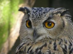 How do owls see their prey while hunting at night? | Daily Two Cents