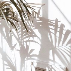 Close your eyes and let the palm shadows dance across your face.tropical dreams come true in style. What does your Friday look like? Lumiere Photo, Shadow Photography, Nature Photography, Summer Photography, White Photography, Shadow Play, Shadow Tree, Beige Aesthetic, Aesthetic Women