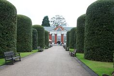 Topiary-lined walkway to The Orangery, Kensington Gardens my favorate place to have tea.