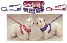 East Side Collection Vibrant Leopard Dog Collars Harnesses & Leads Combo set ! on eBay! $25.07