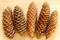Large Wholesale Pinecones for Sale | Pine Cones of the Northwest Pine Cones For Sale, Scented Pinecones, Mabon, Sabbats, North West, Harvest, Equinox, Christmas Time, Thanksgiving
