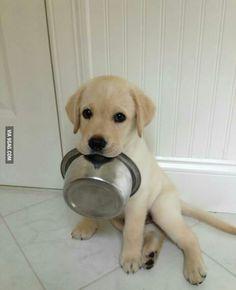 Sweet puppy süßer Hunde Welpe