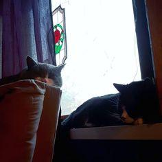 . . . #kallethecat #bastithecat #cats #instacat #catsofinstagram