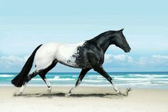 Breathtakingly Beautiful Horses Oh my. You don't often see an Appaloosa quite this distinctively colored--so intensely black and white. You don't often see an Appaloosa quite this distinctively colored--so intensely black and white. Beautiful Horse Pictures, Most Beautiful Animals, Majestic Animals, Rare Animals, Beautiful Creatures, Animals And Pets, Hello Beautiful, Pretty Animals, Unique Animals