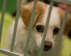 ALDF Petitions to Stop Puppy Gassing in North Carolina | Animal Legal Defense Fund