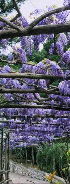 See our 24 hour itinerary on this heavenly island Capri Island, Image Cover, Walk The Earth, Visit Italy, Wisteria, Naples, Spring Flowers, Italy Travel, Heavenly