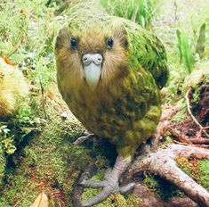 25 Rare Animals That Seem to Come From Another World – Animal species extinction is an evident and disastrous problem the world is facing nowadays due to human… Parrot Drawing, Parrot Painting, Especie Animal, Post Animal, Exotic Birds, Colorful Birds, Rare Animals, Animals And Pets, Beautiful Birds