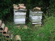 Beehive Pictures - A garden needs Bees!