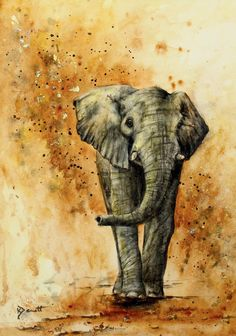 How to paint an elephant in watercolour with Kerry Bennett