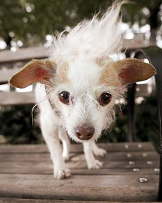 Get To Know: Susie's Senior Dogs |Moomah the Magazine
