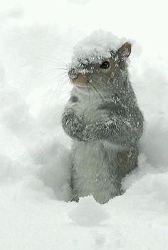 Snow~  乗っちゃうくらい、結構降ってる・・・