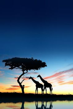 African sunset HD Nature