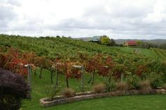 Toms Cap vineyard reception/resort,near Yarram,in Gippsland