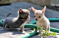 Tiernas fotografías de perros - Antidepresivo