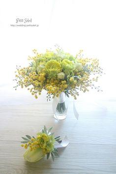 mimosa .. X ღɱɧღ ||