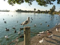 palo alto duck pond: so many weekends here with my dad......