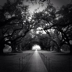 Oak Alley, looking from the house outwards, down the Oak Alley!! by Denelle