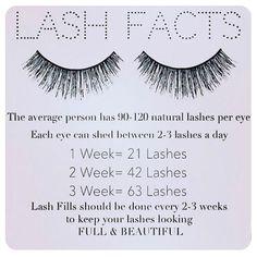 Lash Facts... #lashes #lashextensions #lashton #lash #lashtech #extensions #eyelashextensions #eyelashes #nyc #vigorousbeauty #lashesonfleek #lashmaker #artistsoninstagram