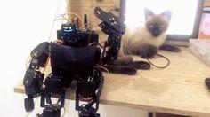 A mesa já é pequena e ainda tenho que com ela...  The table is already small and I even have to share it with her...  #cat #pet #catsofinstagram  #arduino #mediateklabs #linkitone #oled #display #robot #robotica #robotics #robo #bipede #servomotor #servo #motor #bipedal #bipedalrobot #biped #arduinorobot #arduinoandroid #bluetooth #ubec #pca9685 #i2c #gesture #control #portable #speaker by washjunior