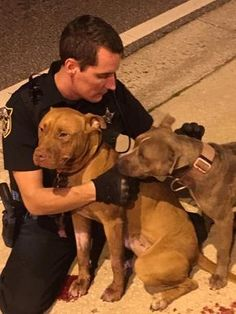10/31/16 Cop Comforts Pit Bulls Who Were Abandoned On The Street. They look like someone took good care of them BUT to do something like this is heartless. Two beautiful pitties #pitbull
