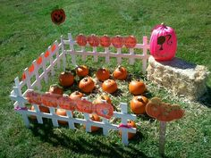 DIY pumpkin patch for October B-Day parties!  Great gift for the guests to take home!