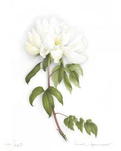 Giant white peony