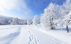 winterlandschaft-mit-viel-schnee-baume-mit-schnee-bedeckt-und-spuren-im-schnee-hd-winter-hintergrundbilder.png (1600×1000)