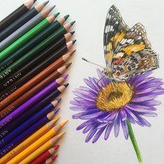 Sandra Ruberto (@sandra__ruberto) • Foto e video di Instagram  #butterfly #flower #drawing #coloredpencils #coloredpencildrawings Butterfly Painting, Video, Colored Pencils, Collaboration, Illustrations, Drawing, Instagram, Colouring Pencils, Drawings
