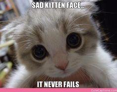 Adopt me!! #racefortherescues #rescuetrain #rescuetrainoc #cutekitten #adorable #kitty #adopt #donate #sponsor #oc #kitten #bigeyes #sad #sadkitty #helpme #takemehome
